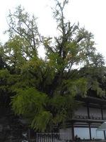 20081103_0255.JPG