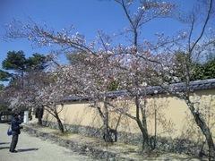 20100327_148.JPG